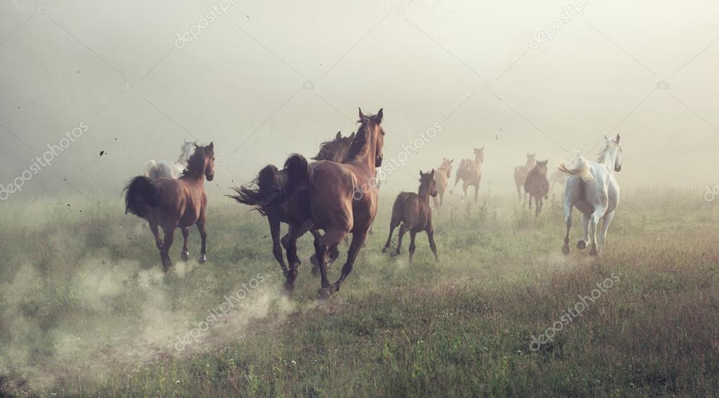 Group of horses on the meadow