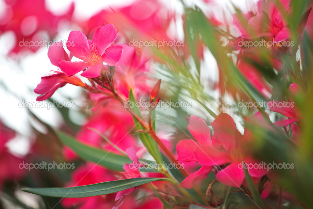 Photo of pinky rural flowers