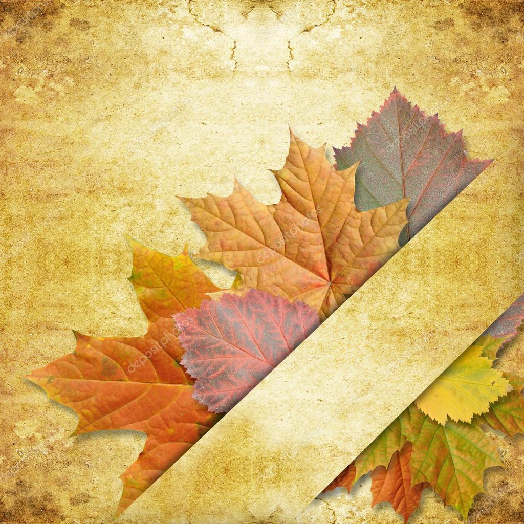 leaf maple on background grunge