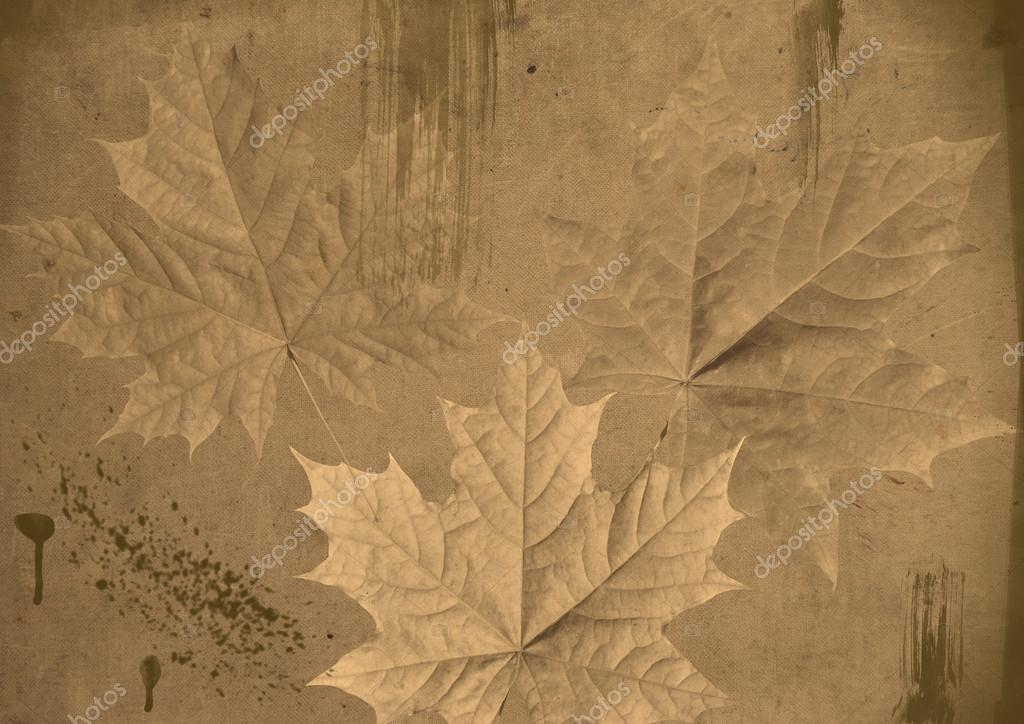 maple leaves on grunge background