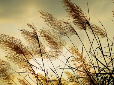 Breeze swaying the grass