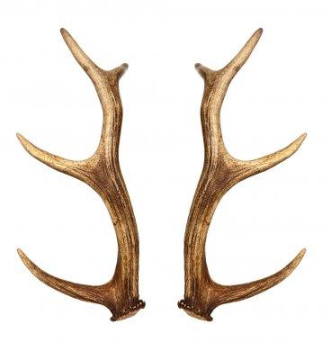 Two deer horns