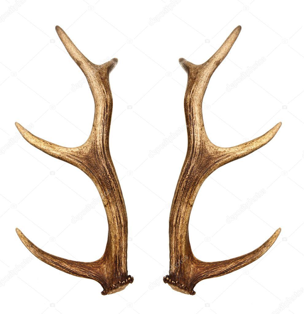 cuernos de dos ciervo — Foto de stock © verdateo #24717195
