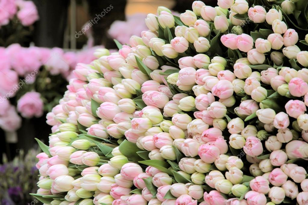 gros bouquet de tulipes roses coup es photographie. Black Bedroom Furniture Sets. Home Design Ideas