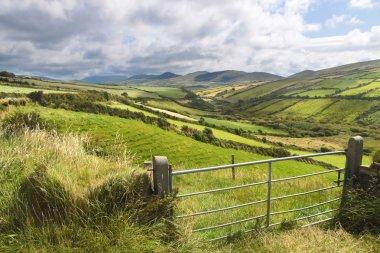 Green meadows near Dingle