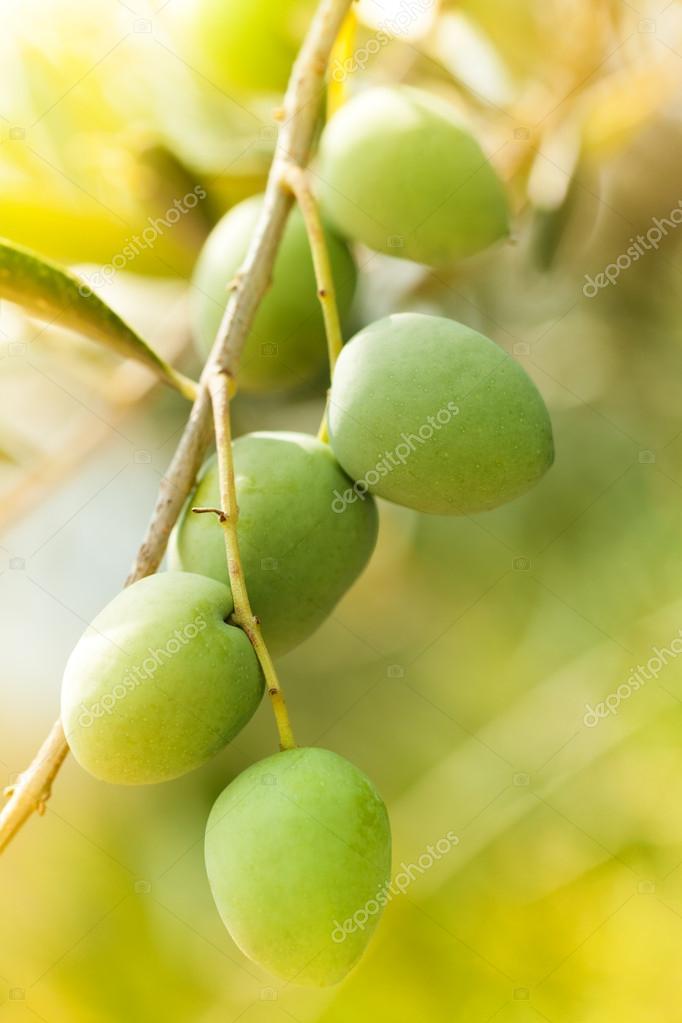 Sunny day in olive garden