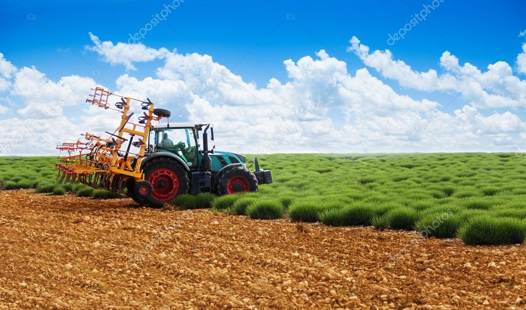Tractor plowing lavender field
