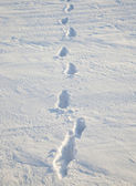 Photo Traces on snow