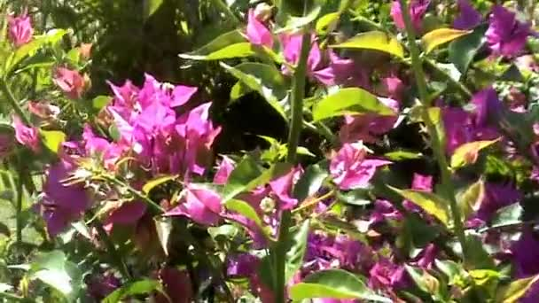 Blooming Australian Plant