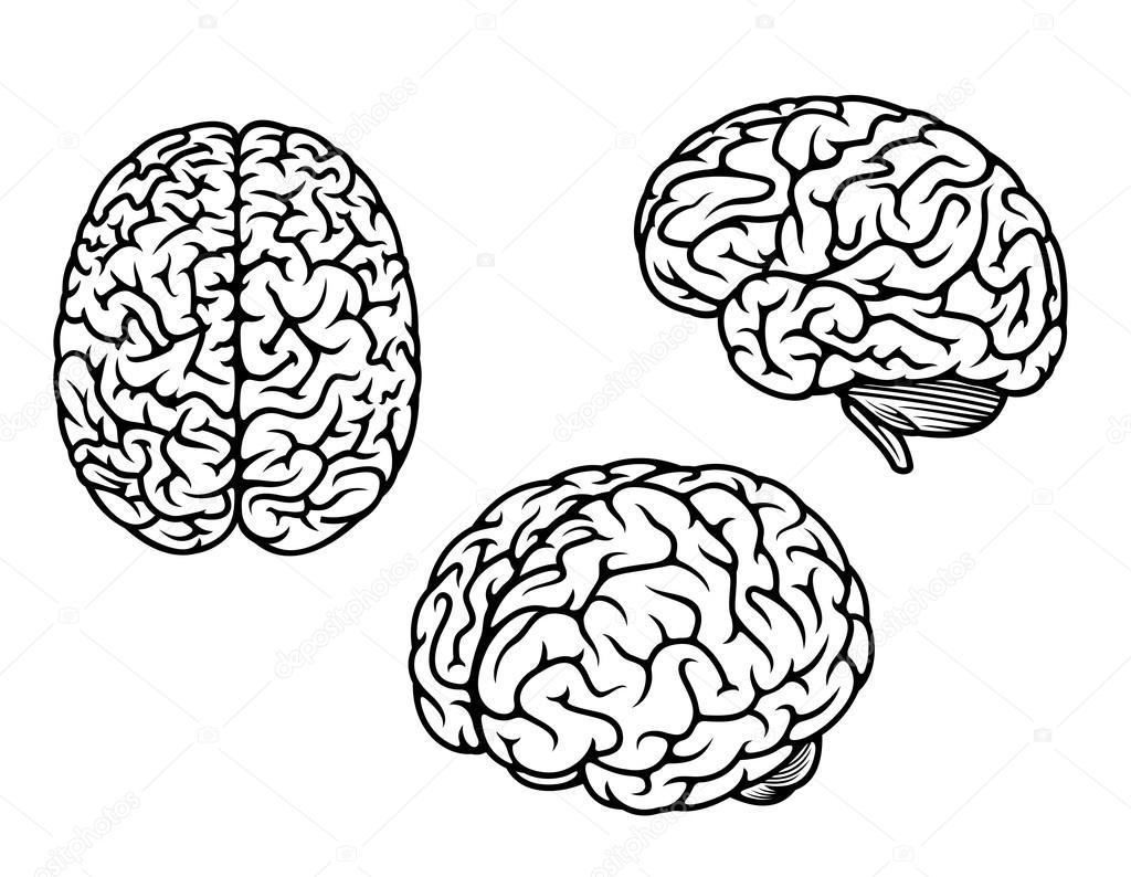 dibujos  cerebro humano para colorear