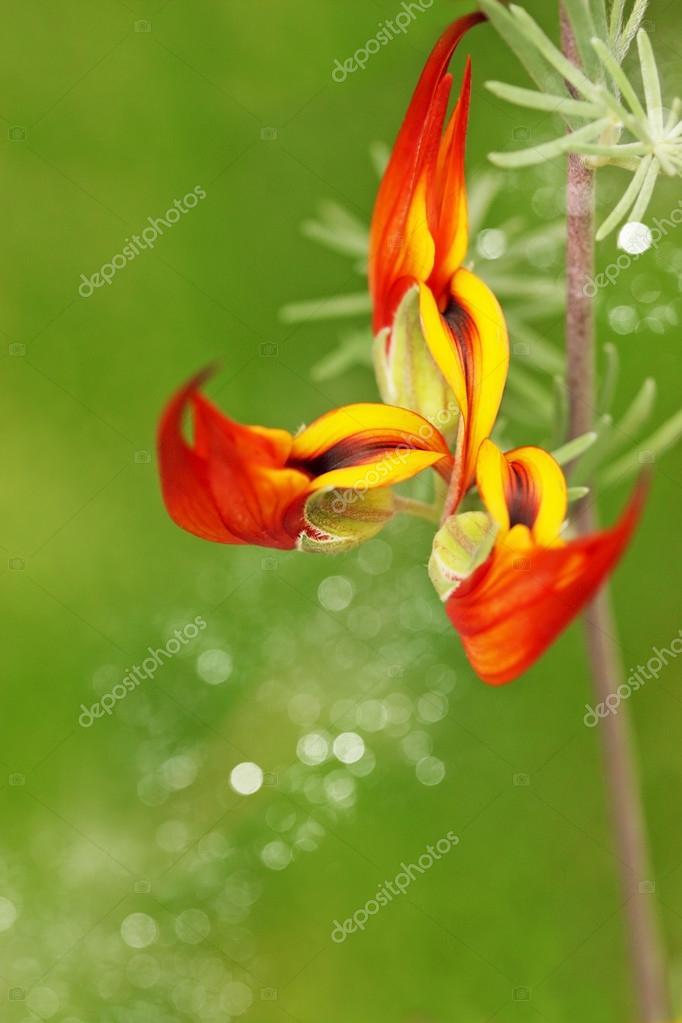 Fleur Exotique Orange Photographie Mallivan C 24156509