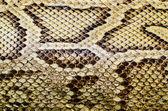 Fotografia texture della pelle di serpente