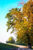 strada e albero autunno