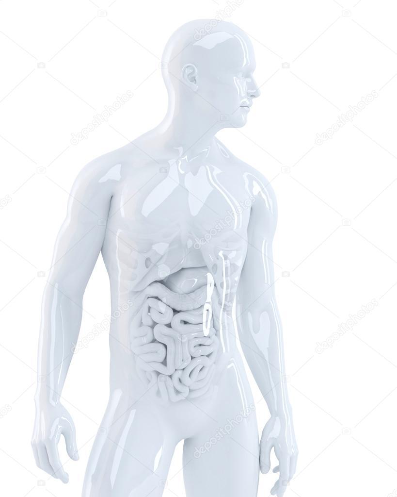 cuerpo humano con órganos internos — Fotos de Stock © KirillM #48050771