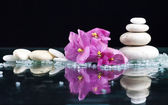 Fotografie Spa with stones and flowers