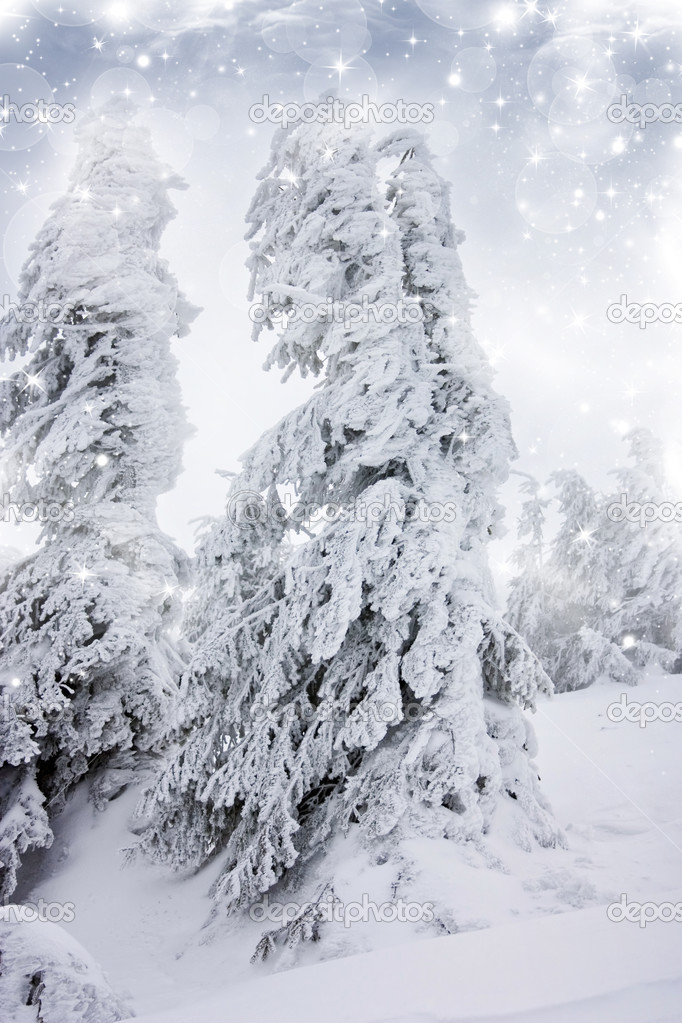 Christmas background with snowy fir trees