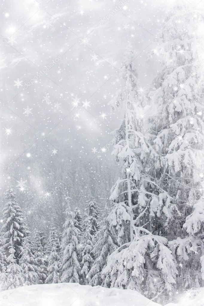 Winter landscape with snow covered pine trees