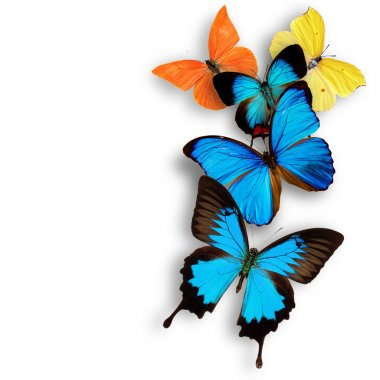 Exotic butterflies
