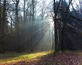 Fotografia foresta con nebbia mattutina