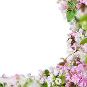 Tavaszi virágok háttér