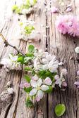 Fotografie Spring blossoms background