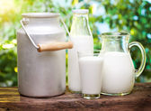 Fotografie Milk in various dishes.