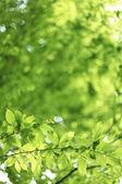 természetes zöld háttérrel, lime zöld.