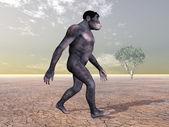 homo habilis - menschliche Evolution