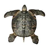 archelon egy óriás tengeri teknős