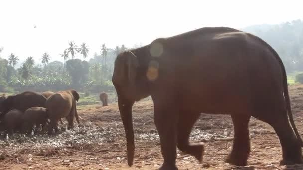 象のグループSkupina slonů.