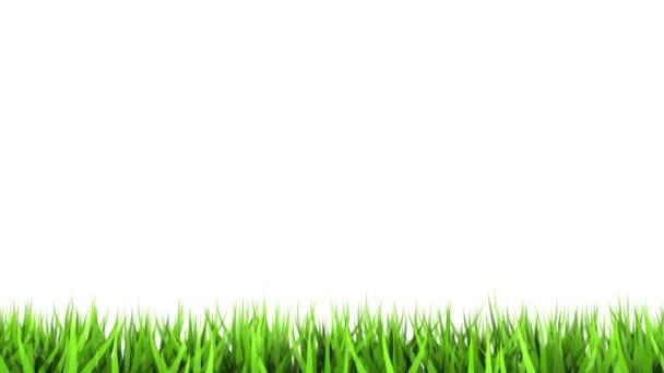 3D generovaný zelená stébla trávy izolovaných na bílém pozadí. matný kanál. timelapse
