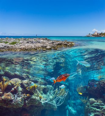 Coral and fish in the sea world