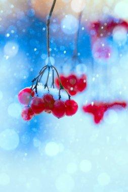Art winter nature