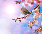 abstraktní jaro hranice pozadí s růžovými květy