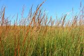 Fotografie nachusa pastviny - illinois