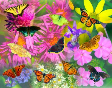 Butterfly and Flower Collage