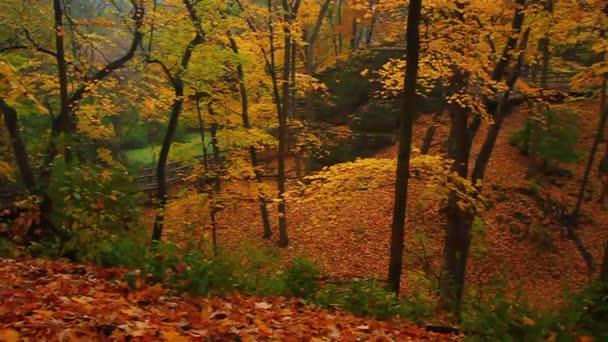 podzimní Les Illinois