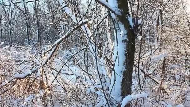 Illinois Zimní krajina