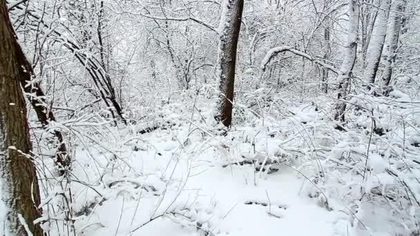 Winterwunderland im nördlichen Illinois