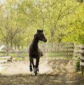 Fotografie Running horse