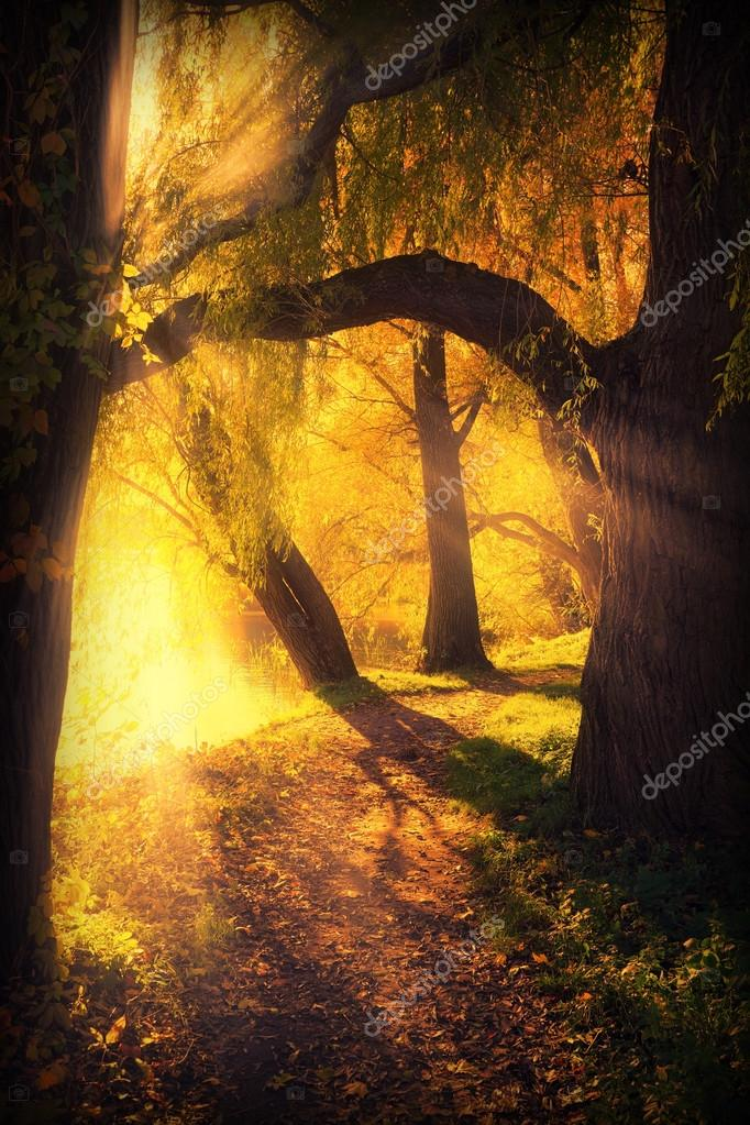 mysterious pathway between arch of trees
