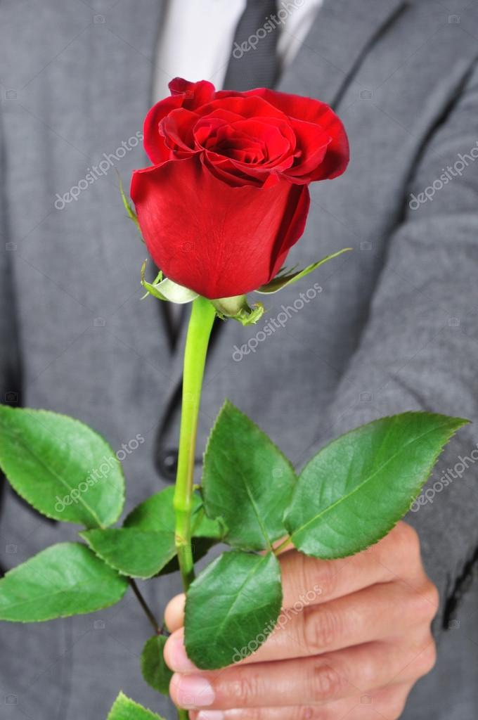 Imágenes Una Rosa Para Descargar Una Rosa Para Ti Foto De Stock