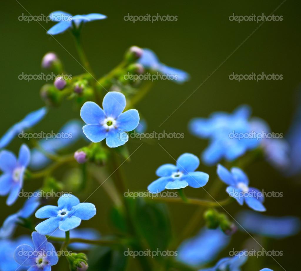 kleine blaue blumen stockfoto be low 25366581. Black Bedroom Furniture Sets. Home Design Ideas