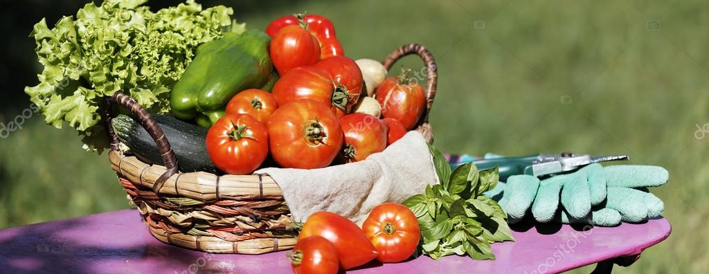 Panoramic vegetables