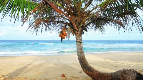 tropická pláž