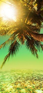 Tropical sunset. Vertical panorama.