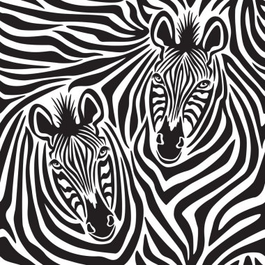 Zebra Couple