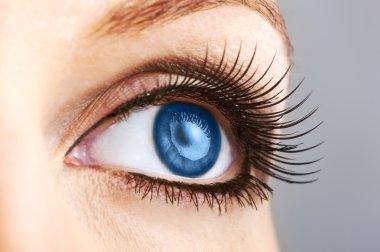 female blue eye with false lashes