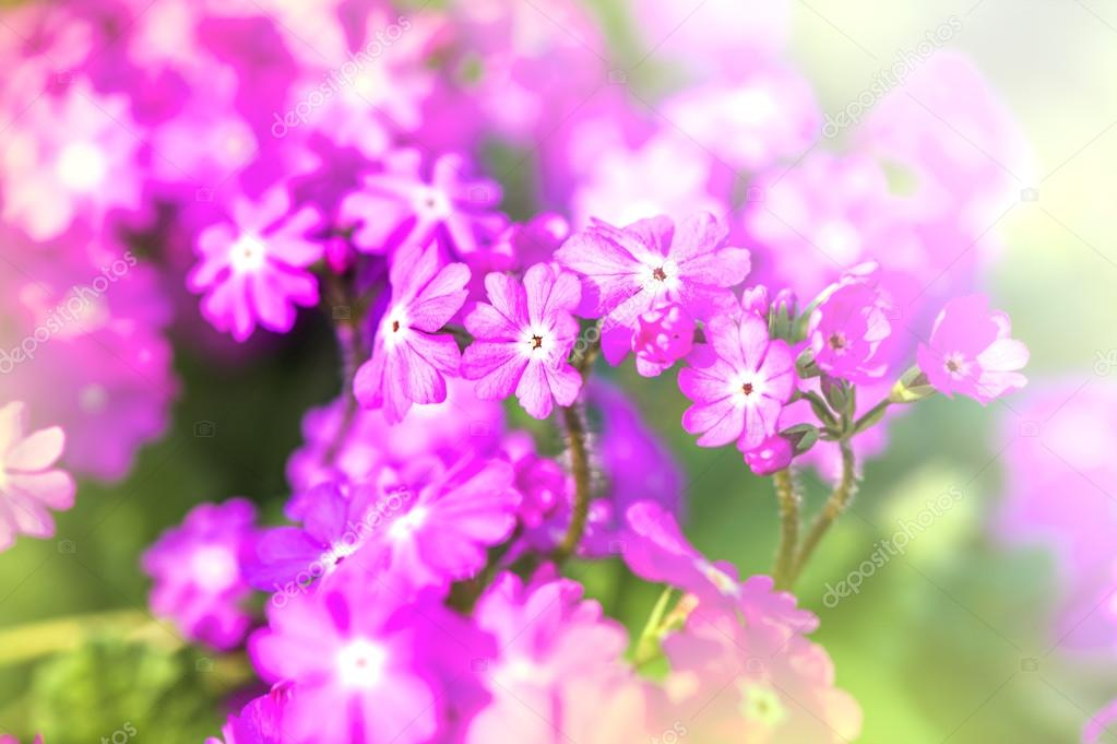 Defocus beautiful purple flowers