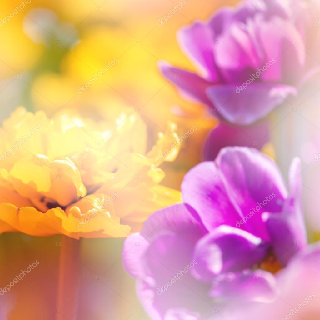 Defocus beautiful flowers